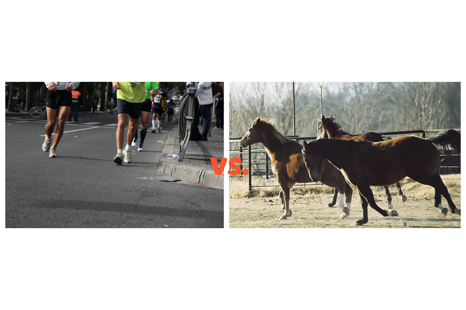 Who Runs Faster, a Person or a Horse?