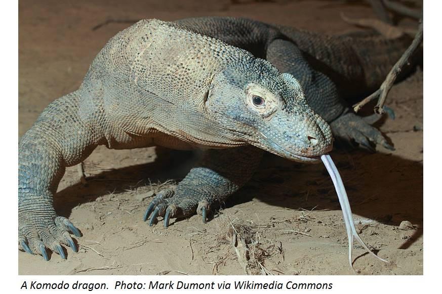 Geckos, Dragons, Chameleons, Oh My!
