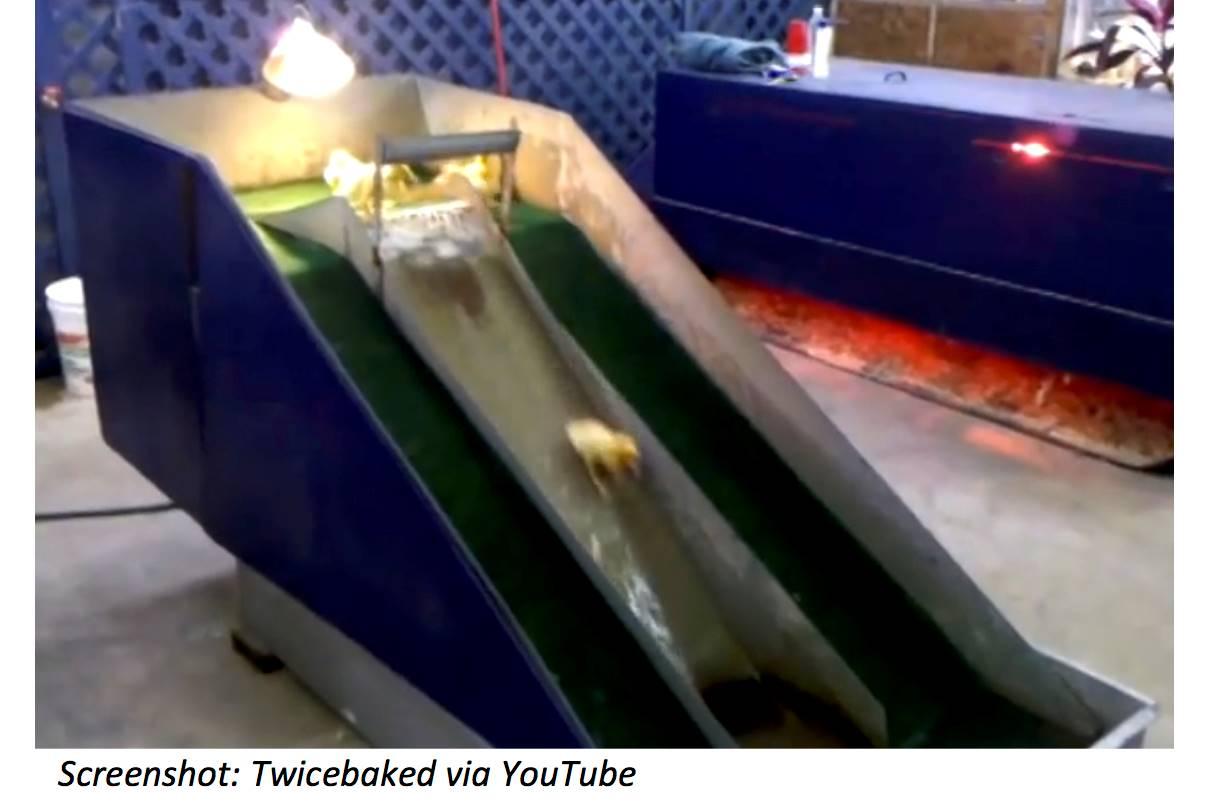 Waterslide for Ducks