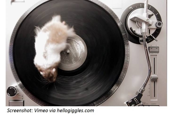 Small Furry Animals on Turntables