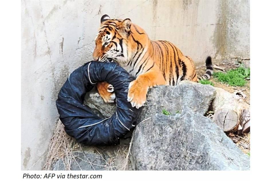 Tiger-Torn Jeans
