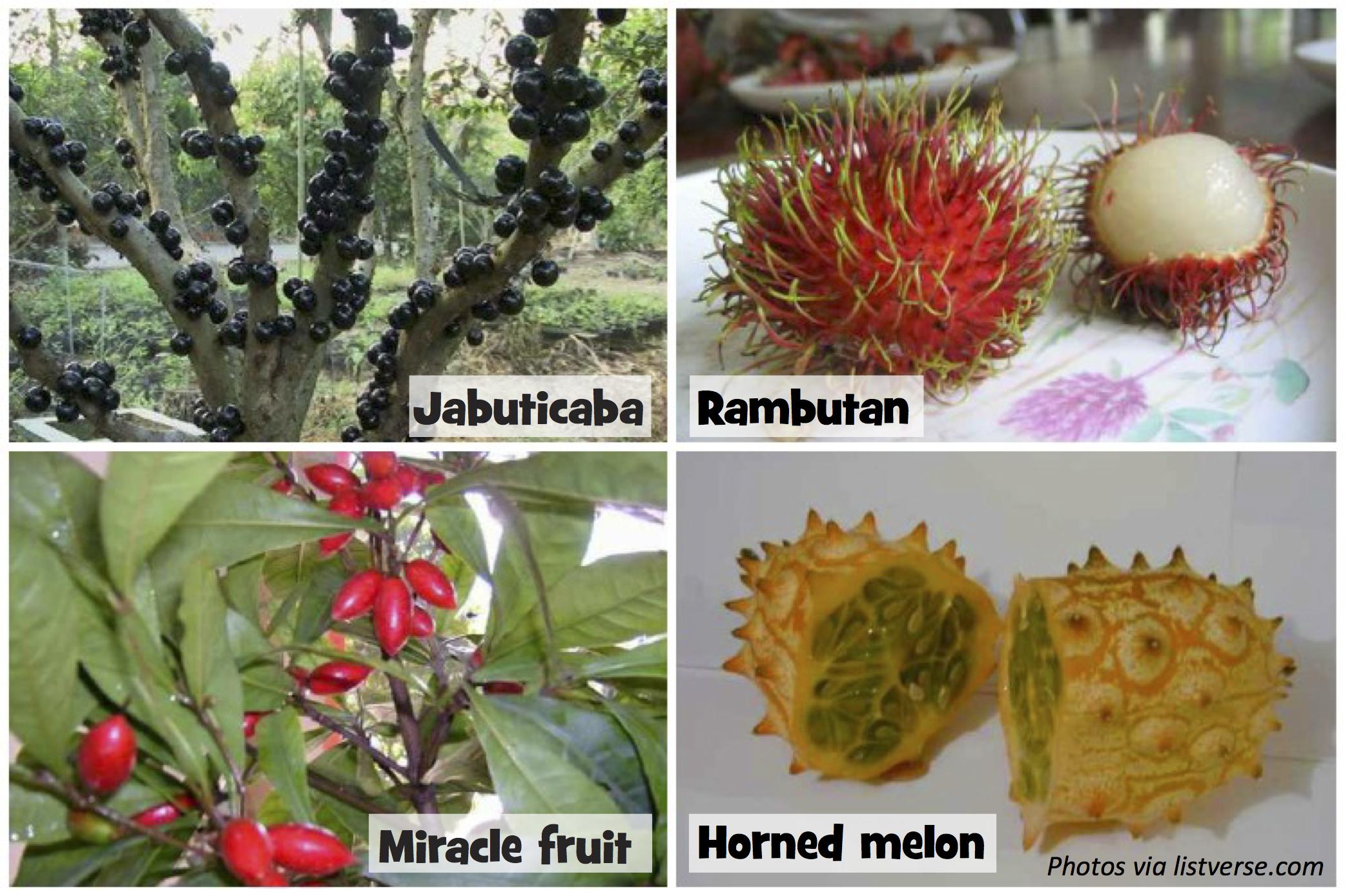 The Weirdest Fruit You've Never Tasted