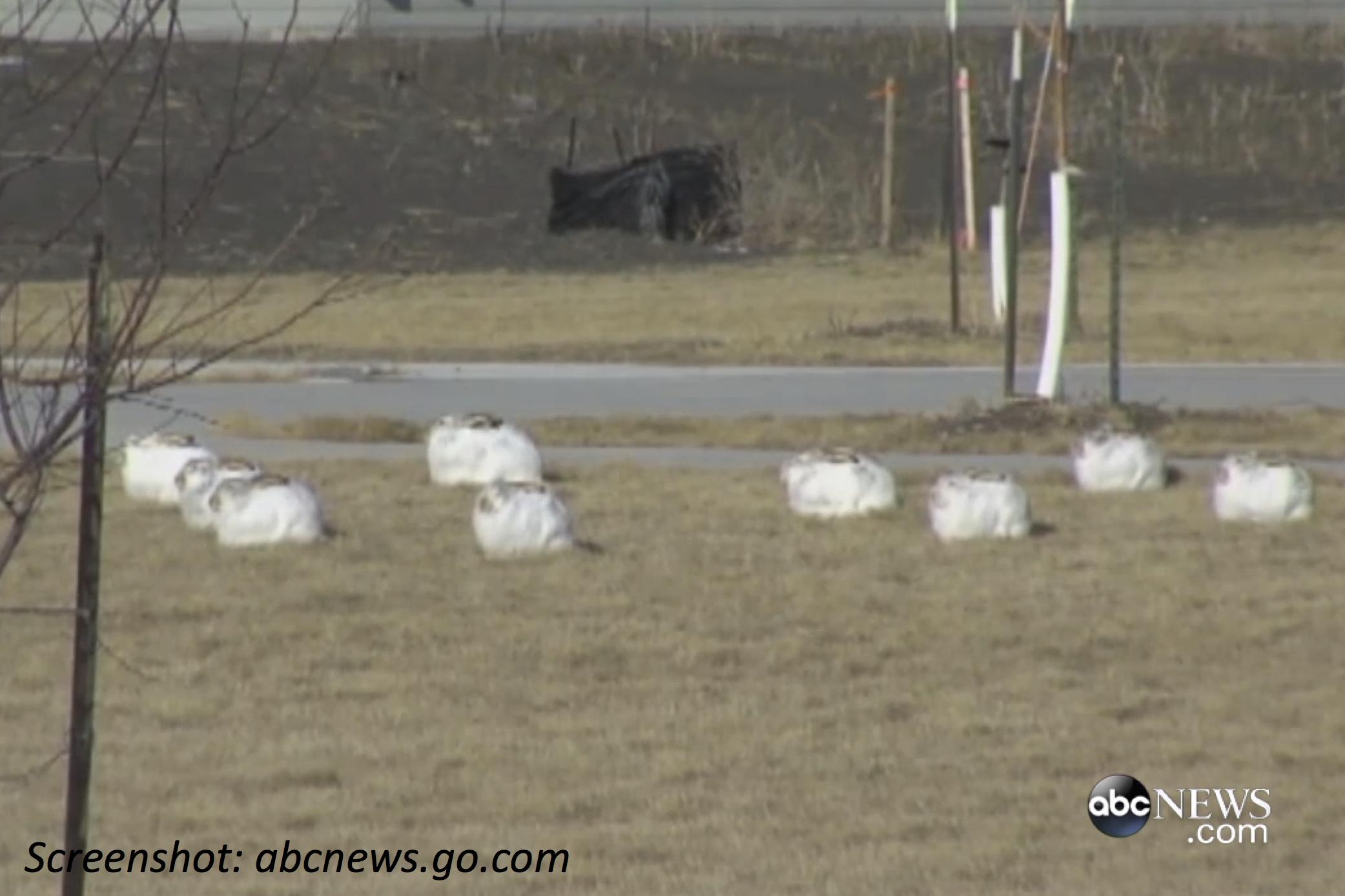 Big Burst of Bunnies