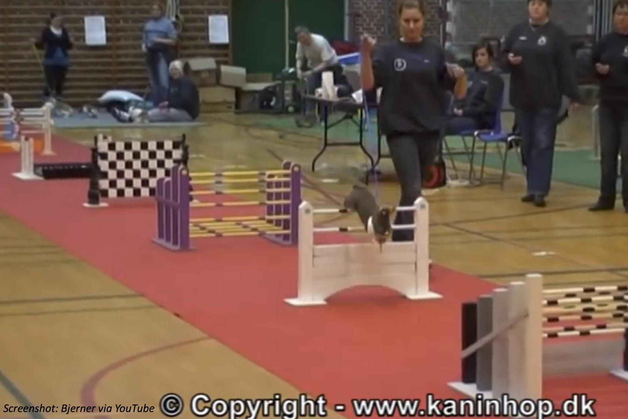 Big-Jumping Bunnies