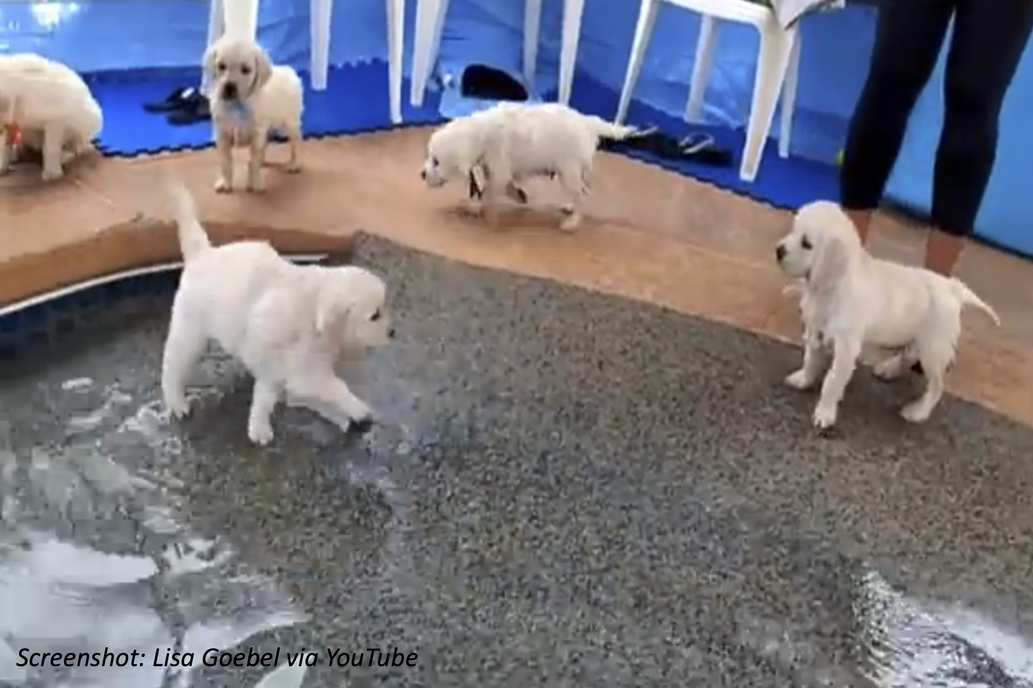 Doggy Paddle Like a Pro