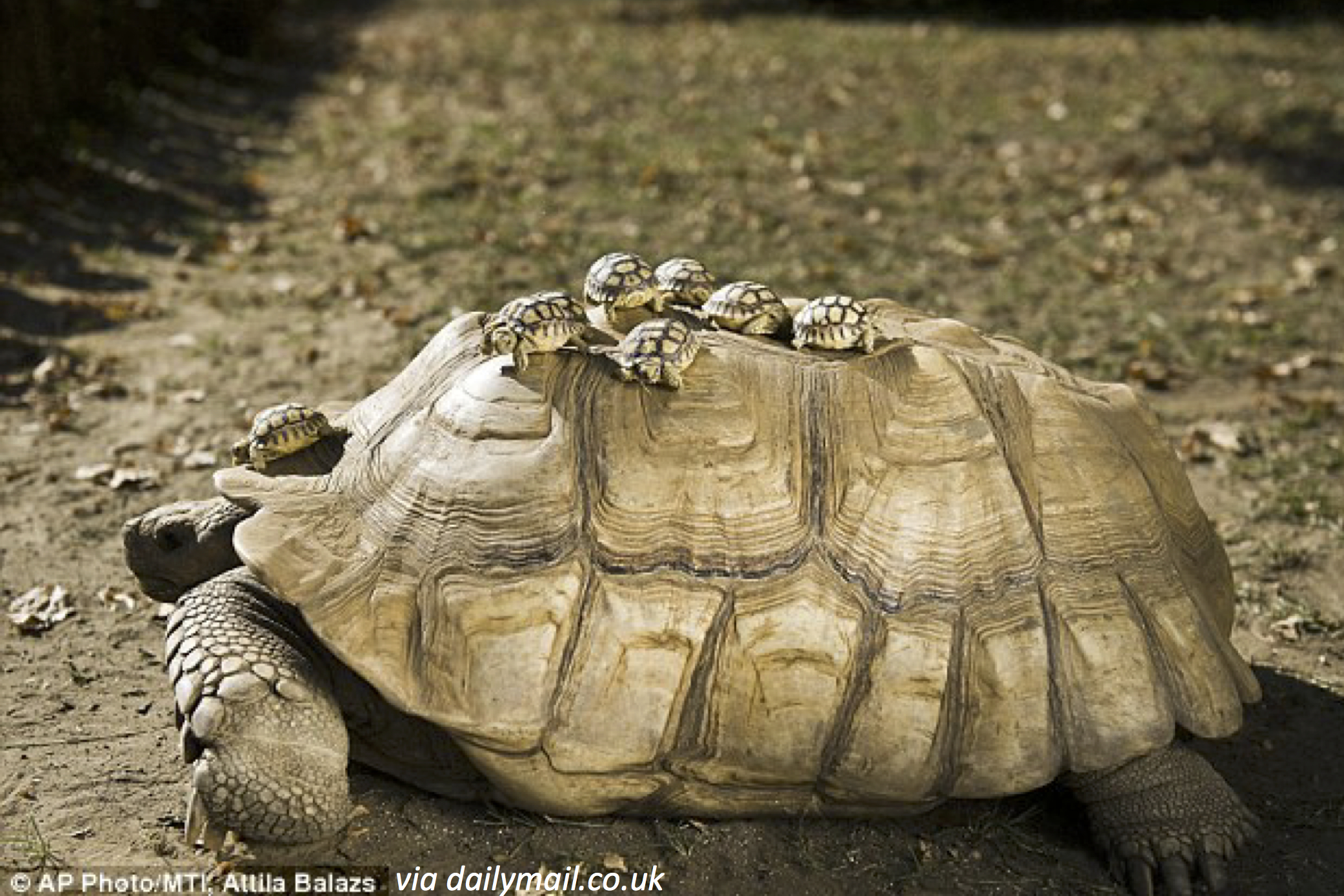 A Ride with Mama Turtle