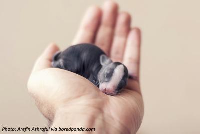 Baby bunny eyes closed