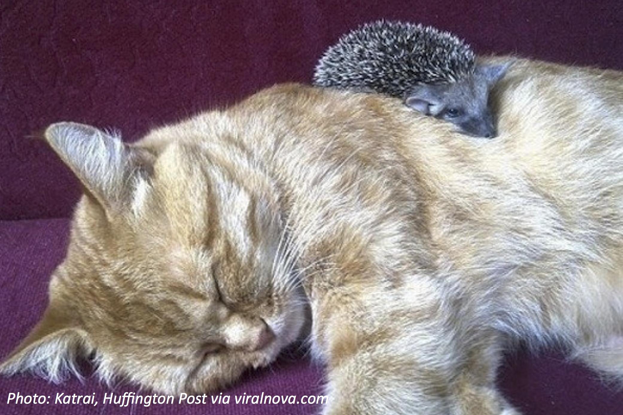 A Very Prickly Family