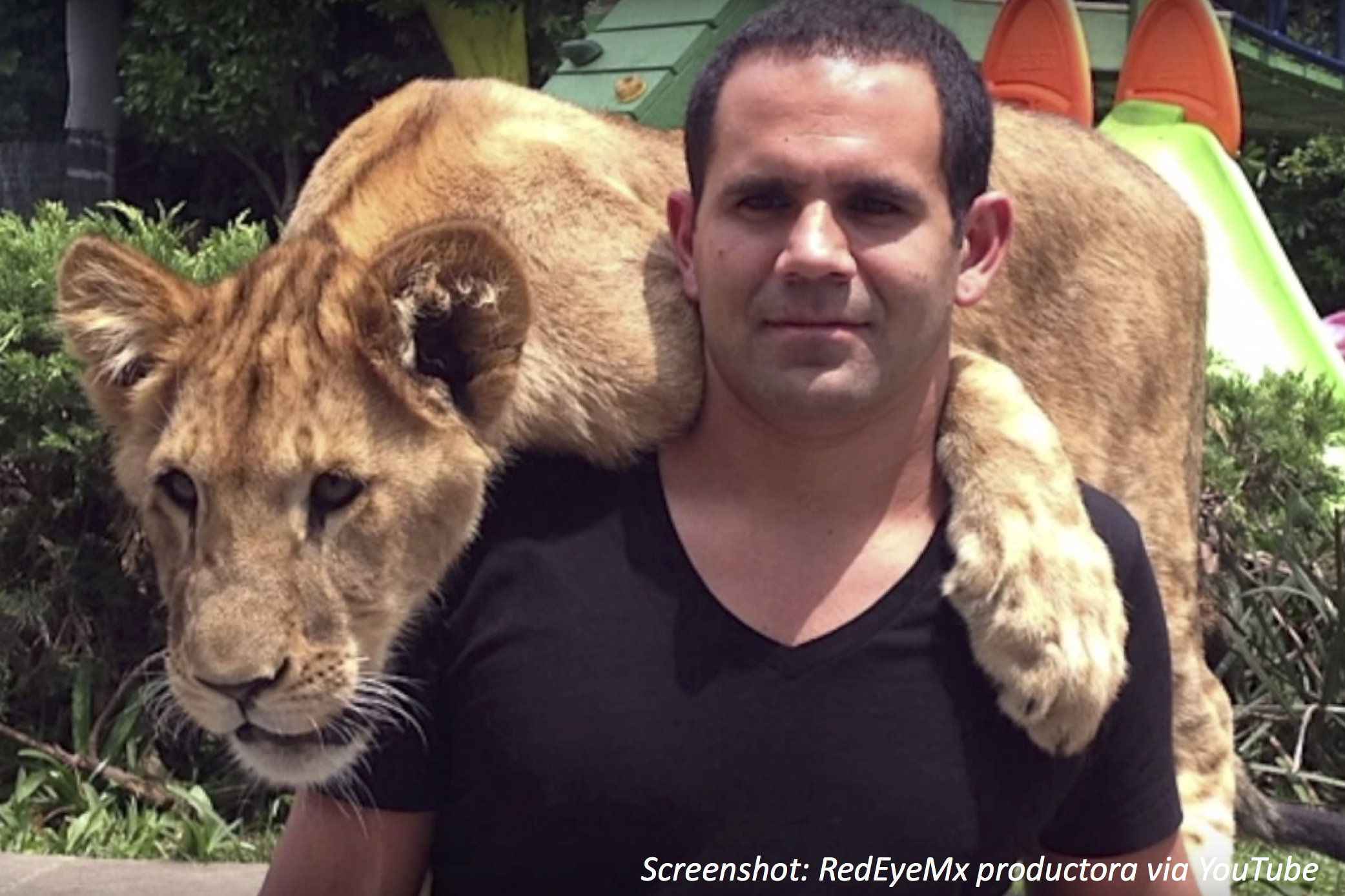 Rescuing the Big Cats