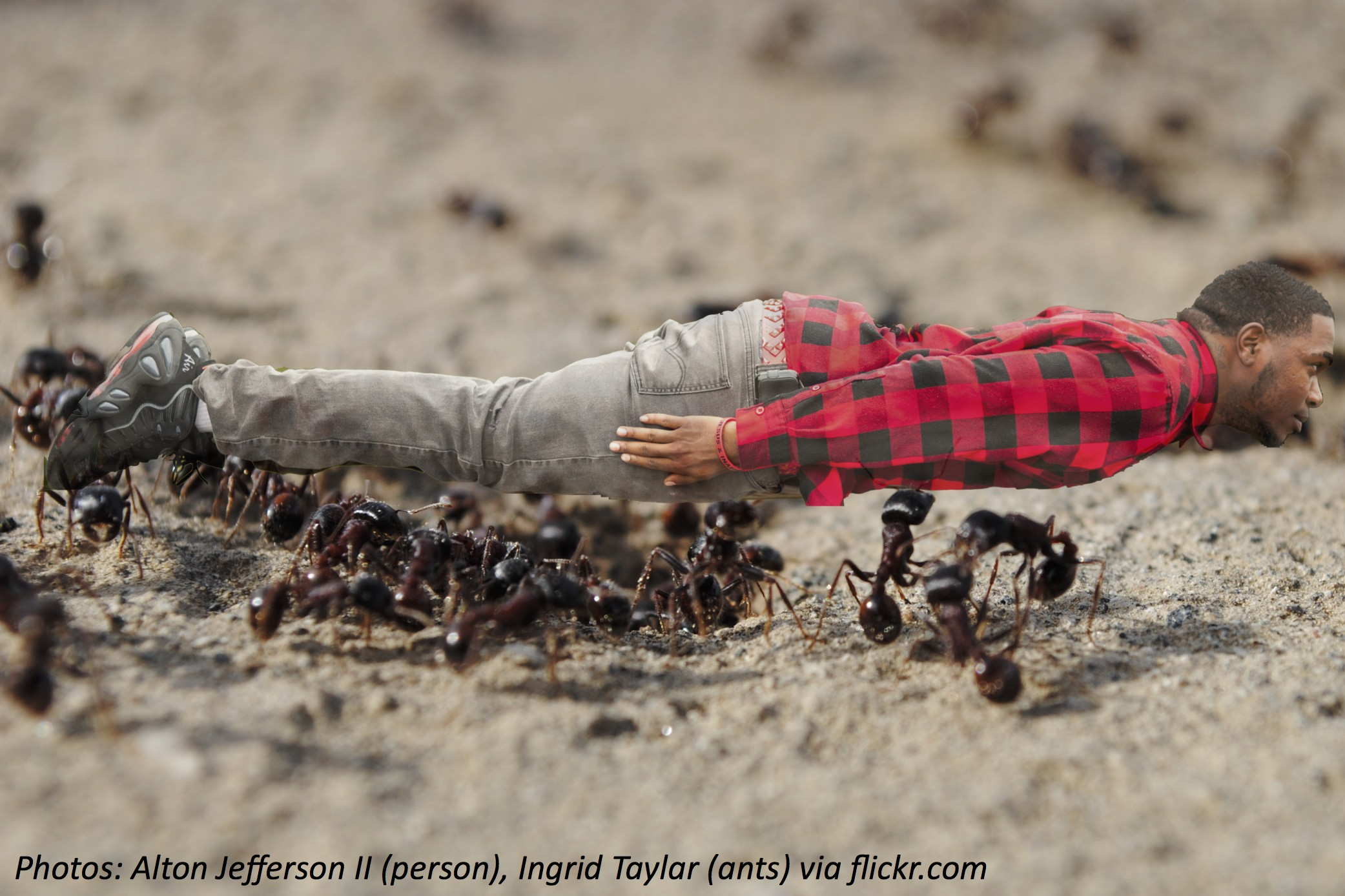 Getting Carried Away – by Ants