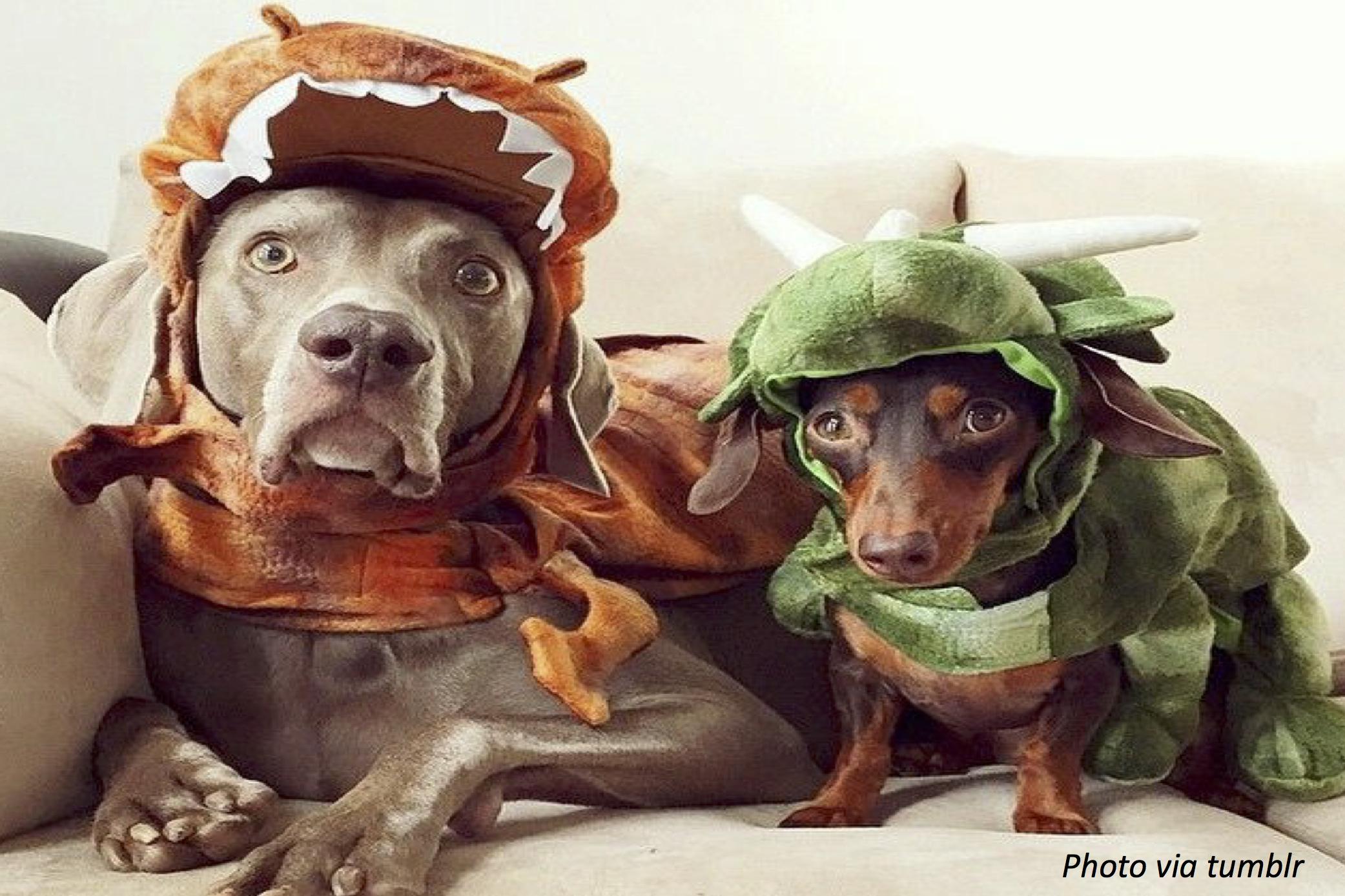 Dinosaur Dogs
