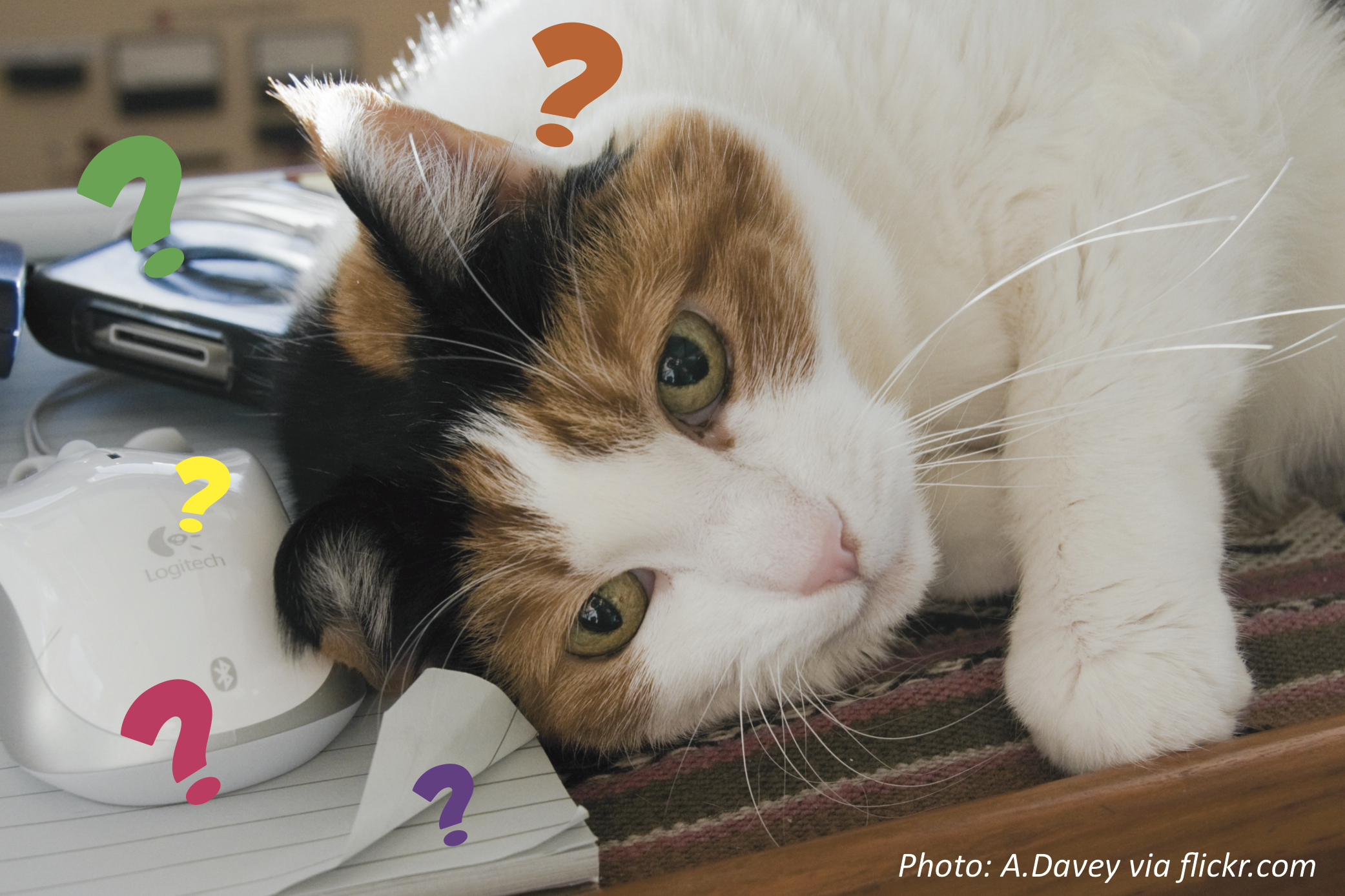 """""""Answer Your Cat's Questions"""" Day"""