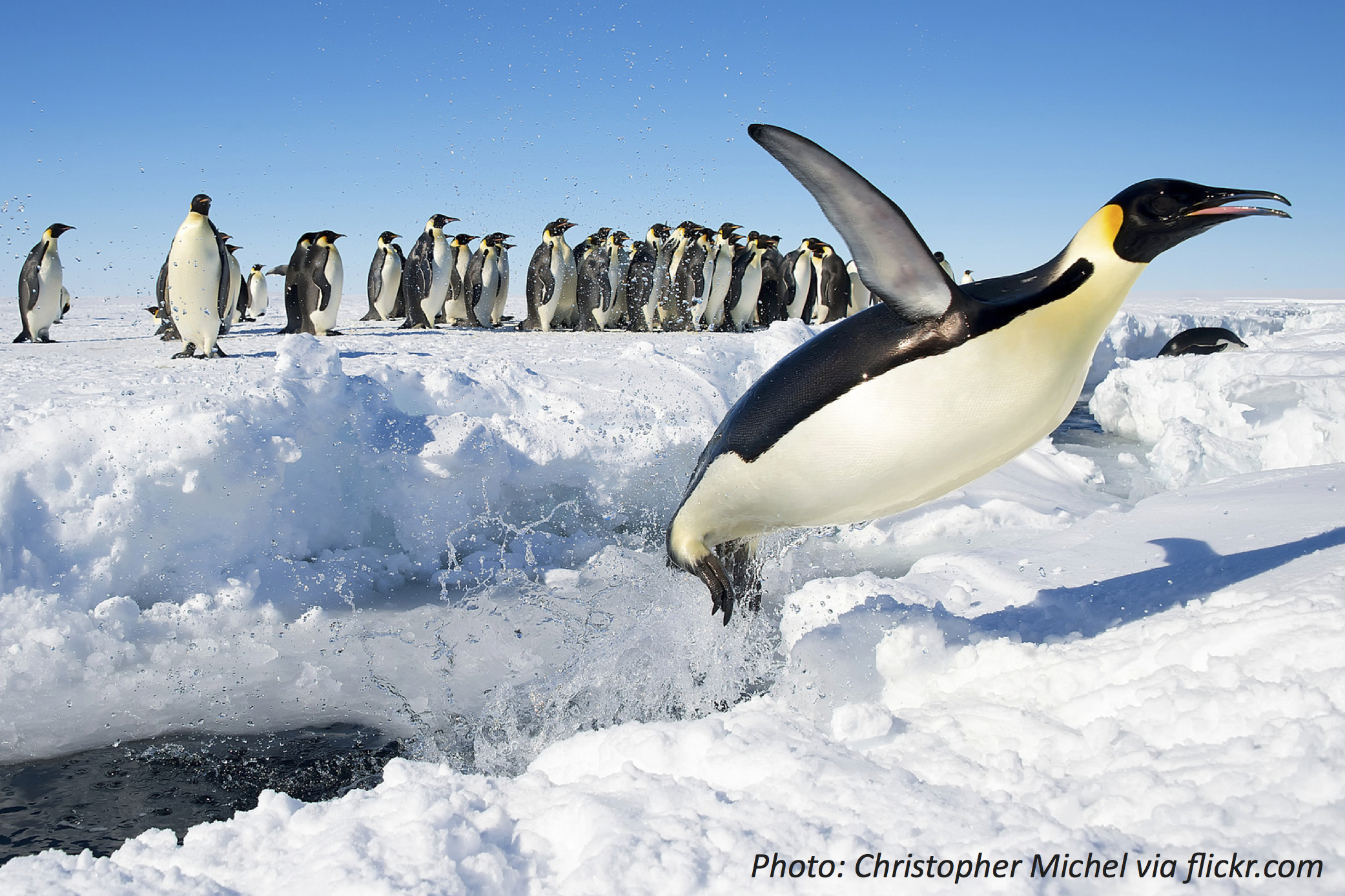 Look Out for Penguins