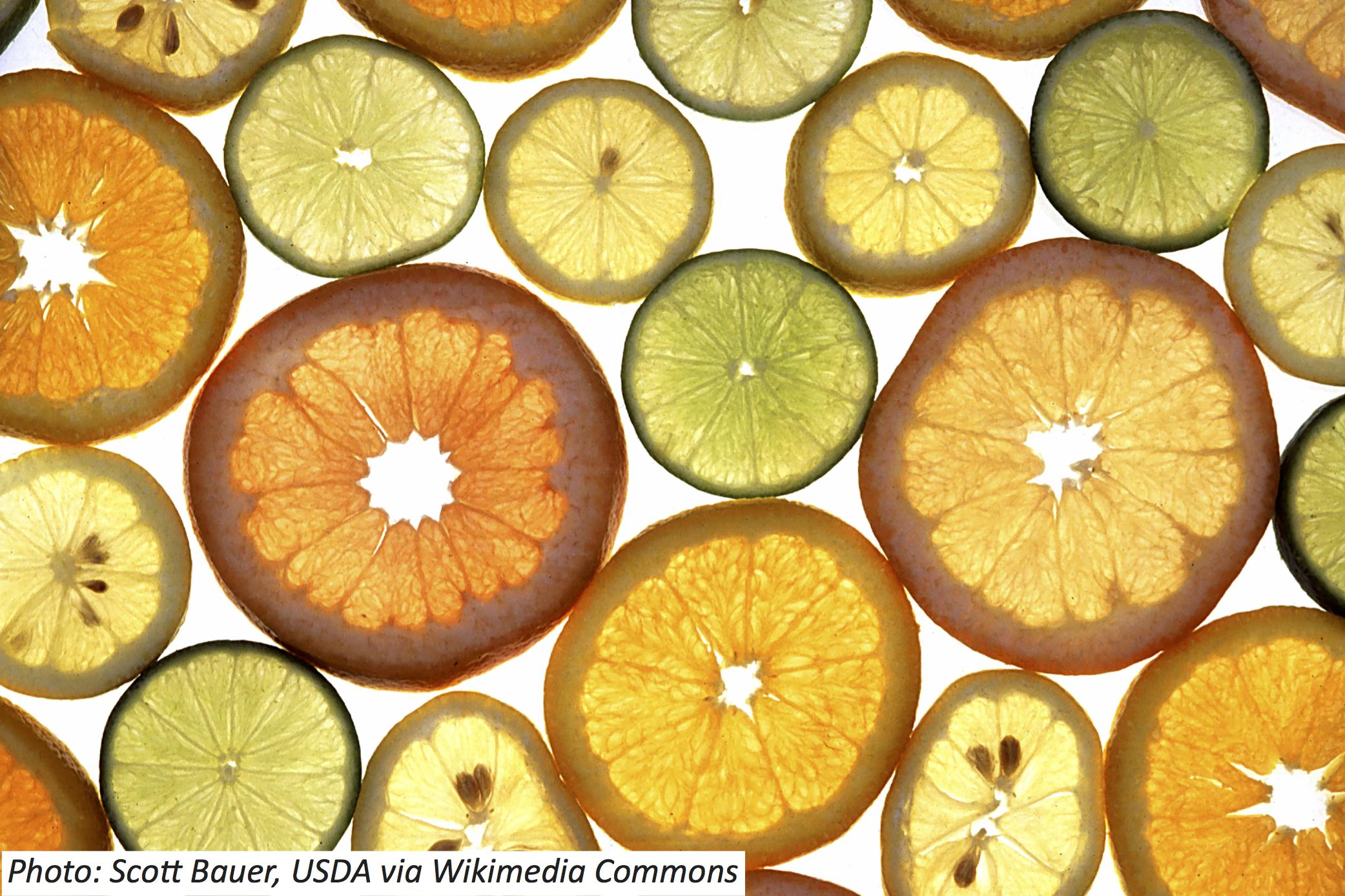 A Secret about Citrus Circles