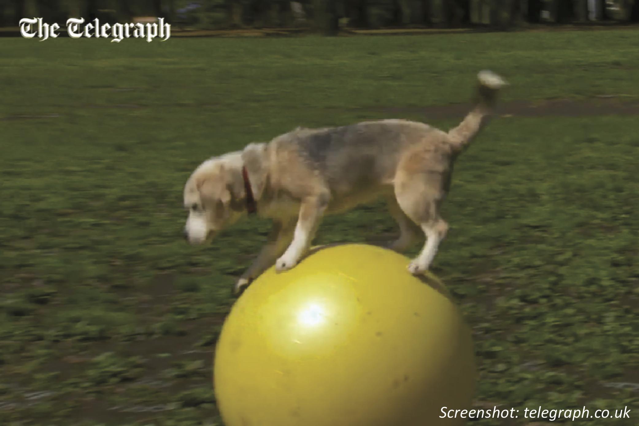 A Record-Breaking Beagle