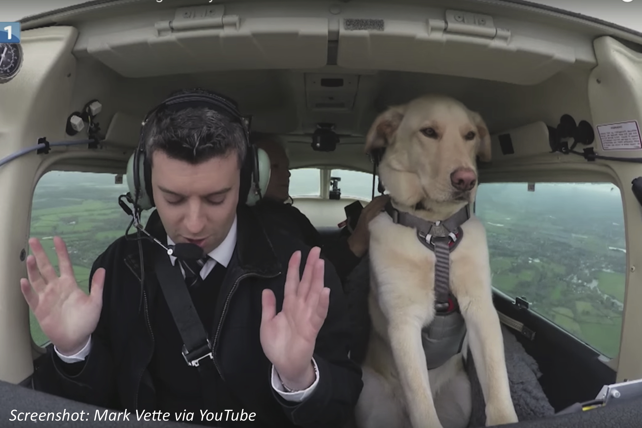Can Dogs Fly?