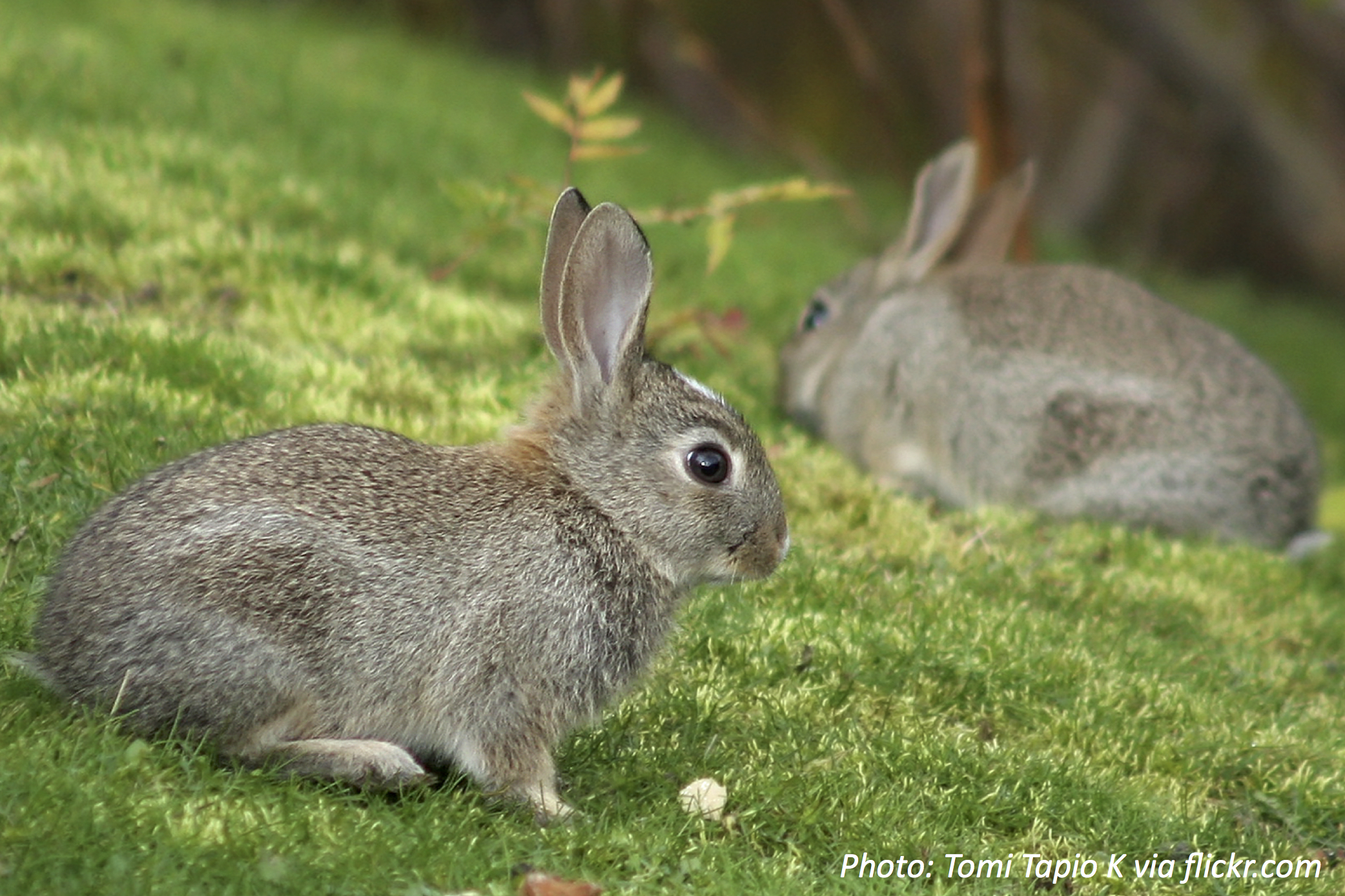 The Bunnies on Your Block