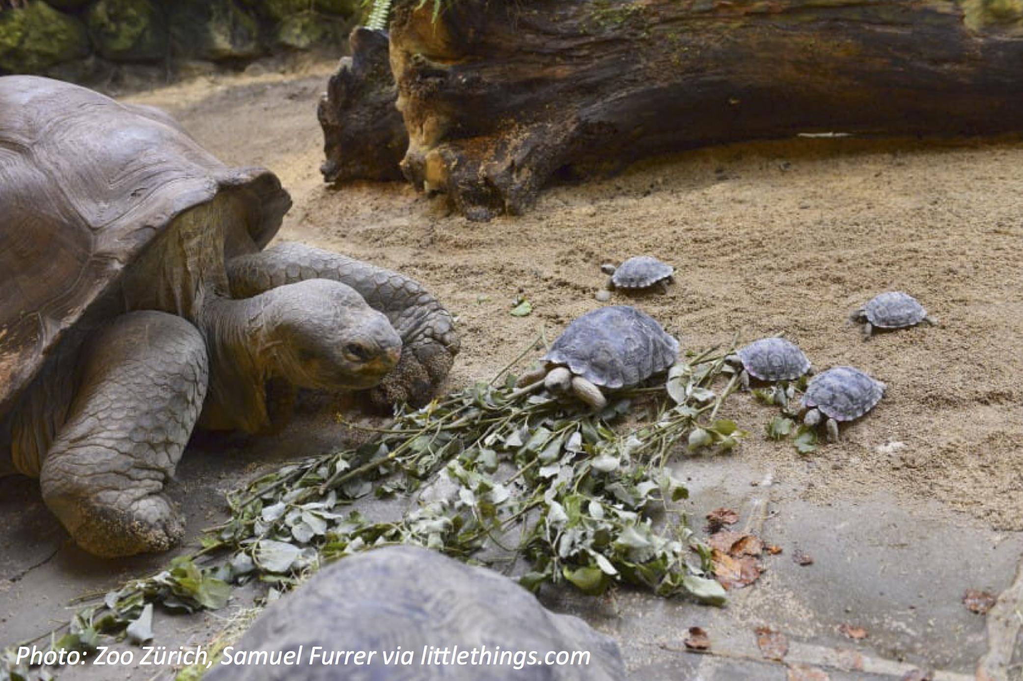 Giant Family for a Giant Tortoise