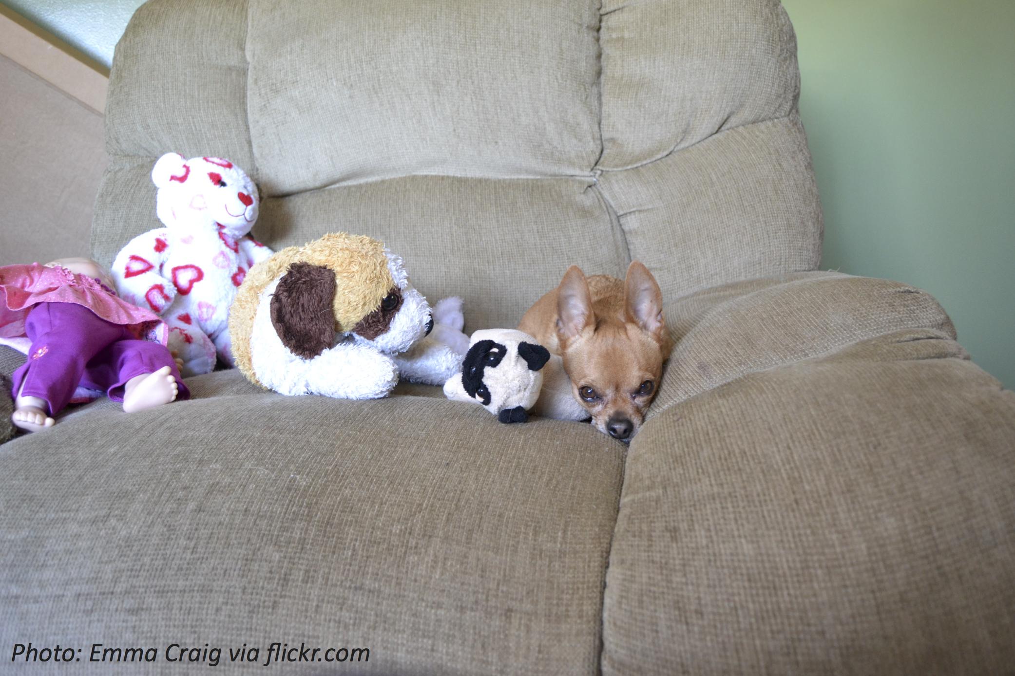 A Year of Stuffed Animals