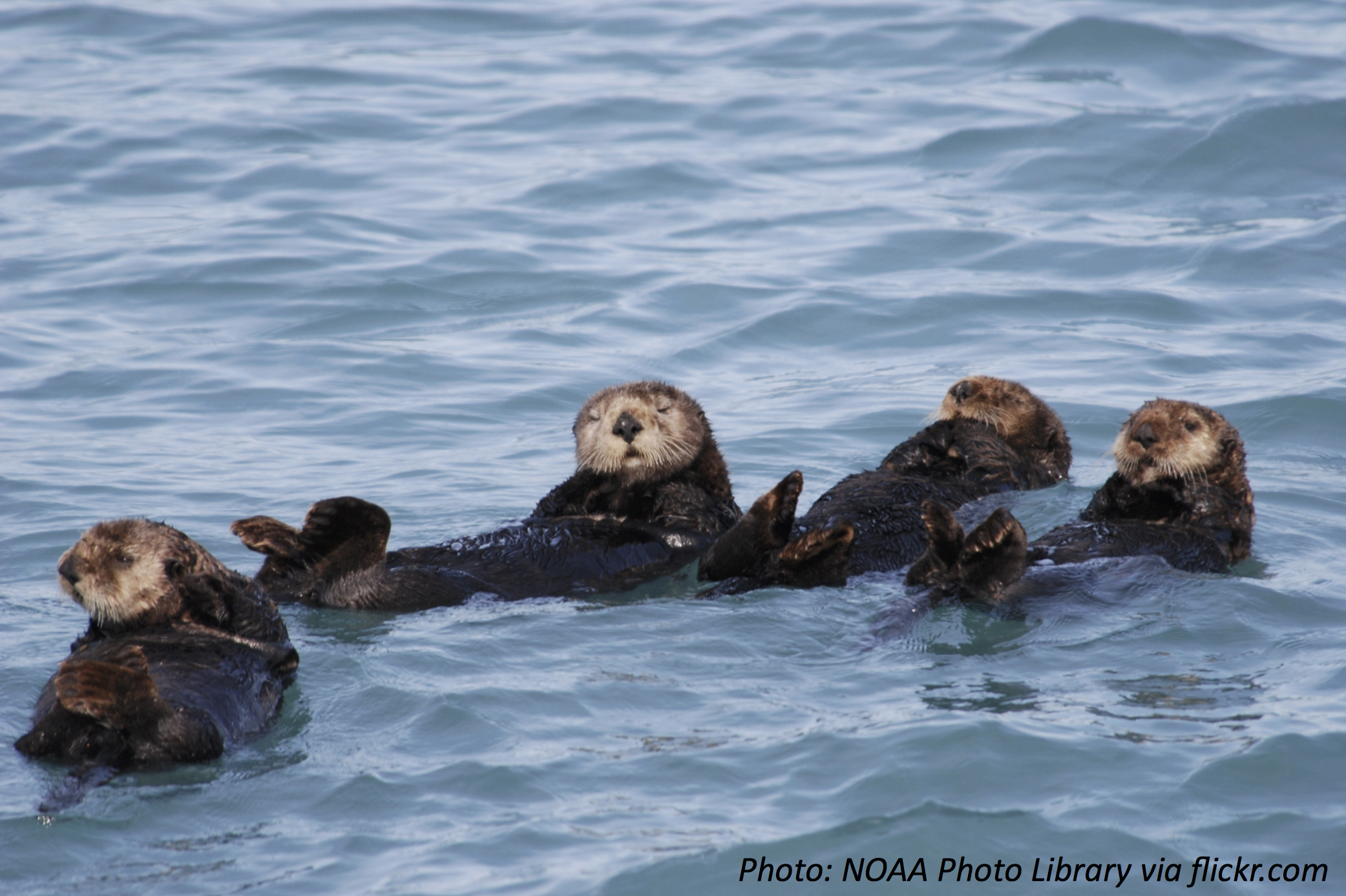 One Way or the Otter