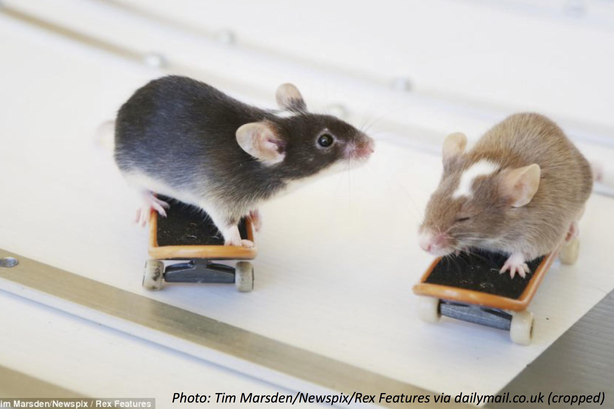 Skater Mouse