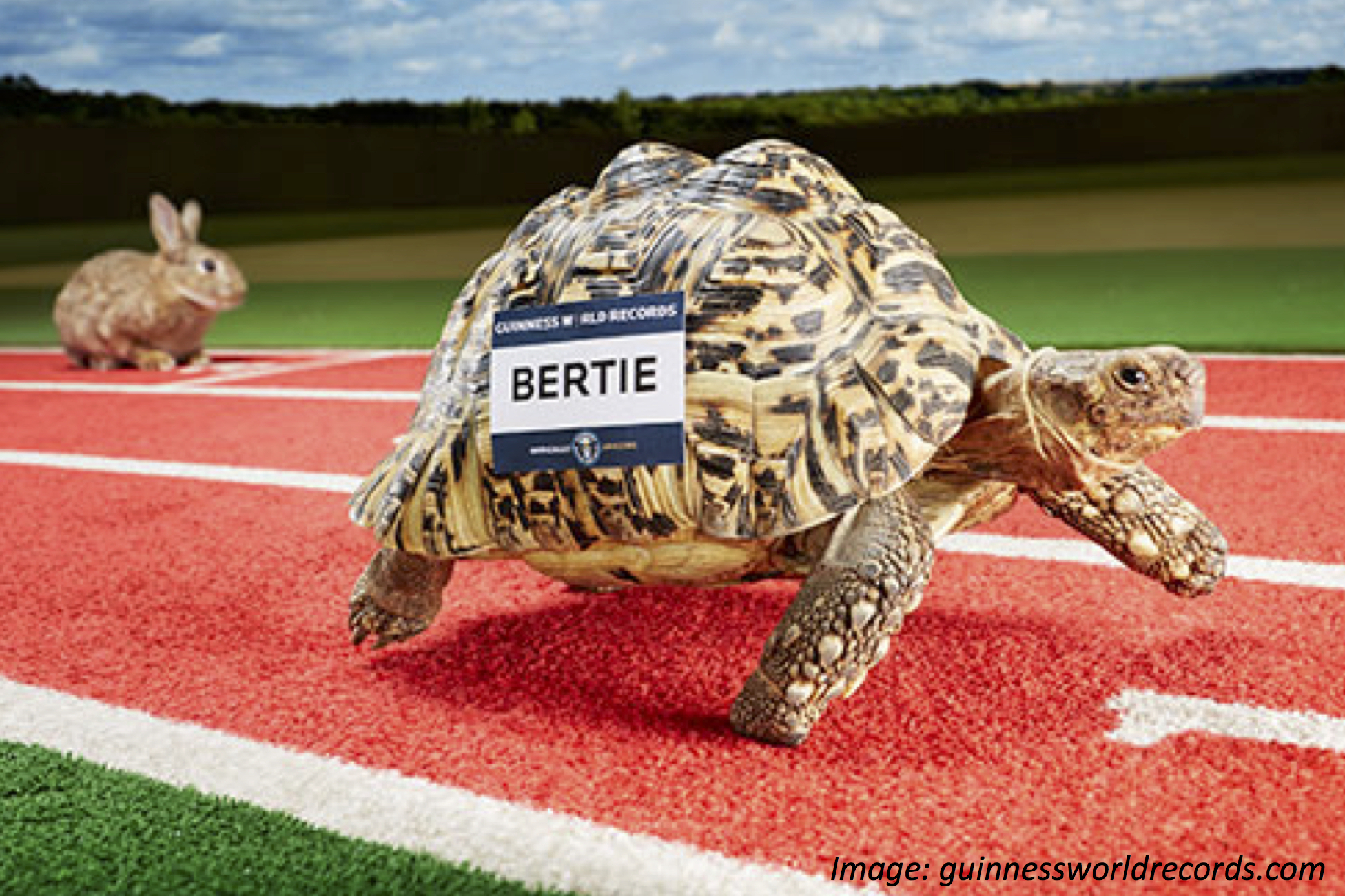 The Tortoise That (Almost) Beats the Hare