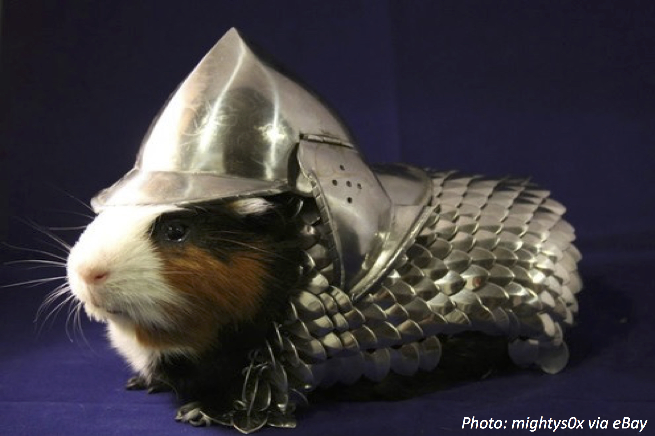 Best Suited for Guinea Pigs