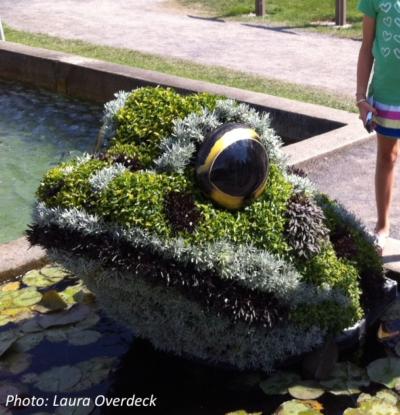 bush-art-of-frog