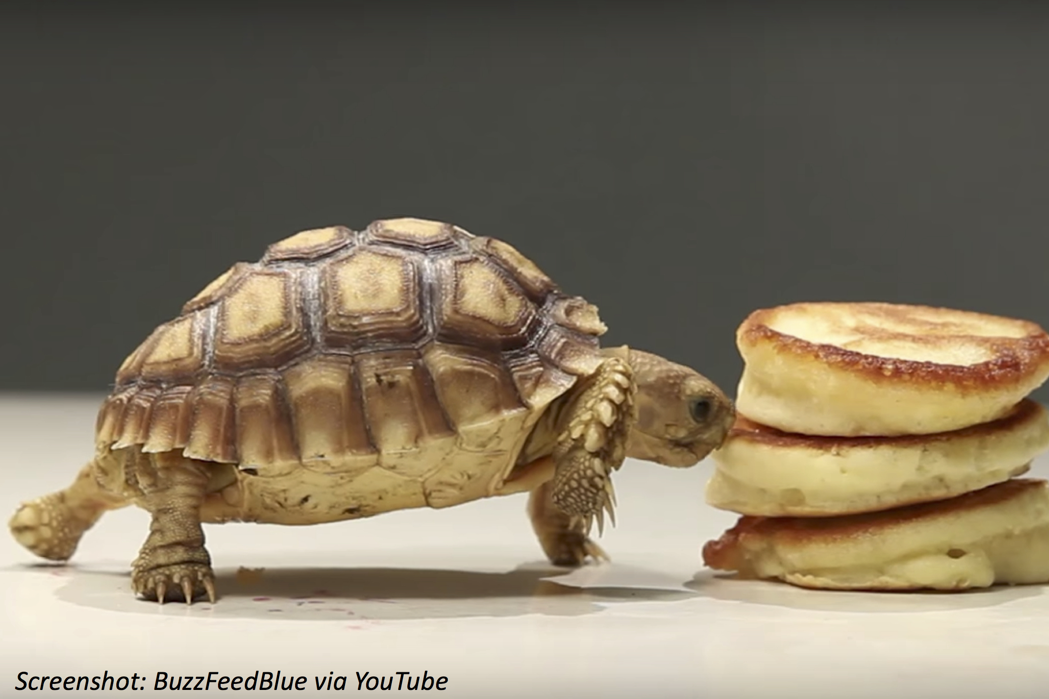 Pancakes for Your Pets