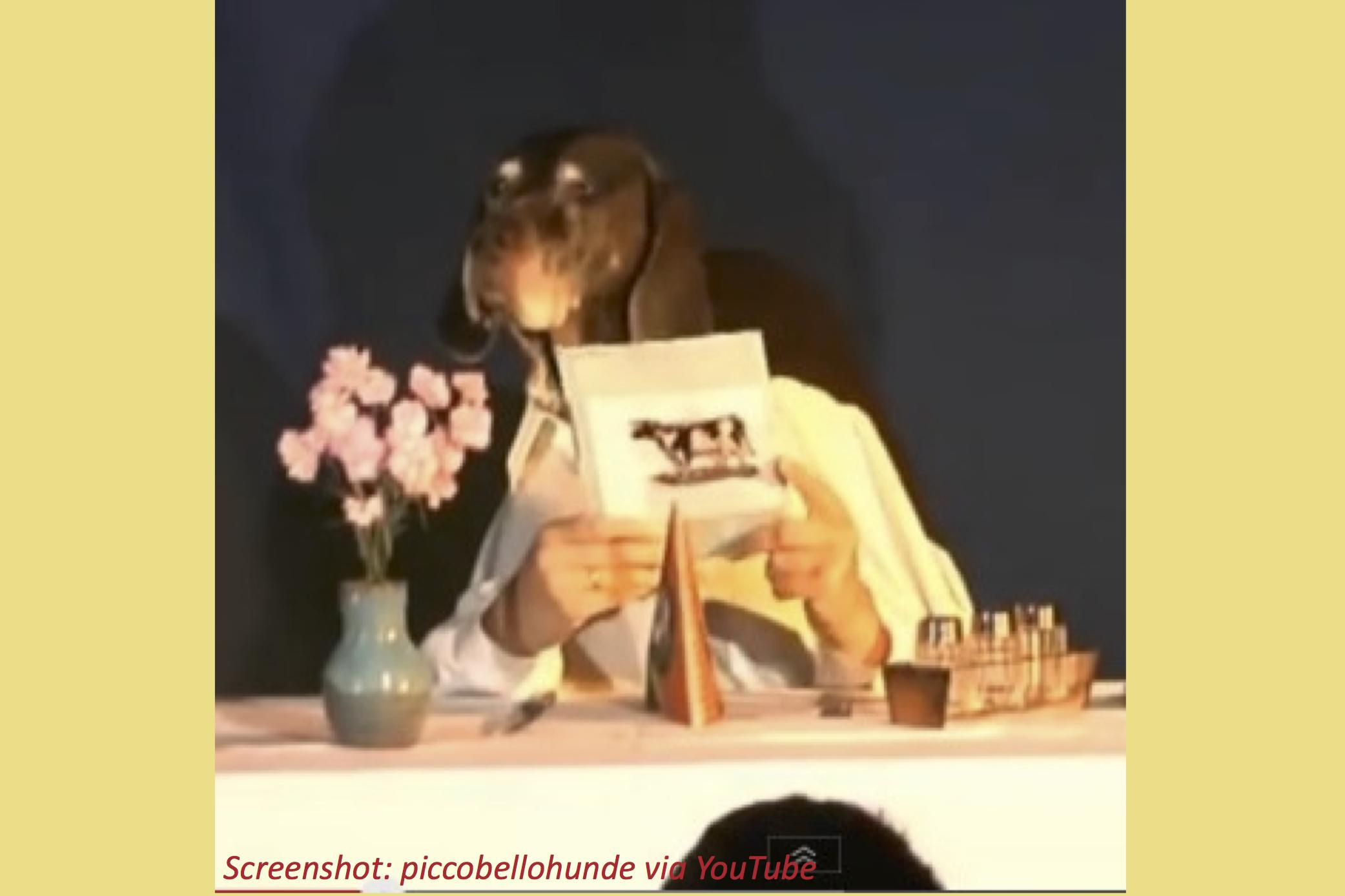 Fine-Dining Dog