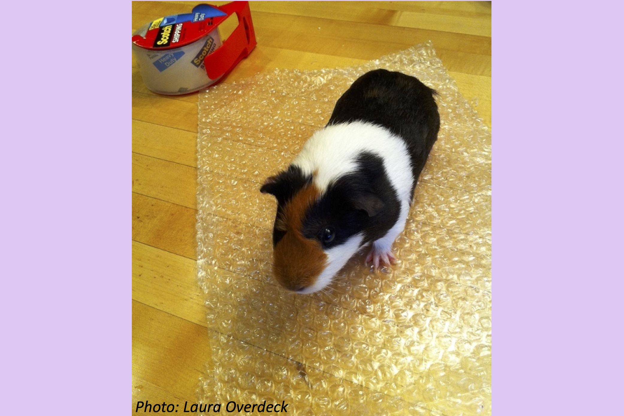 The Best Day for Bubble Wrap