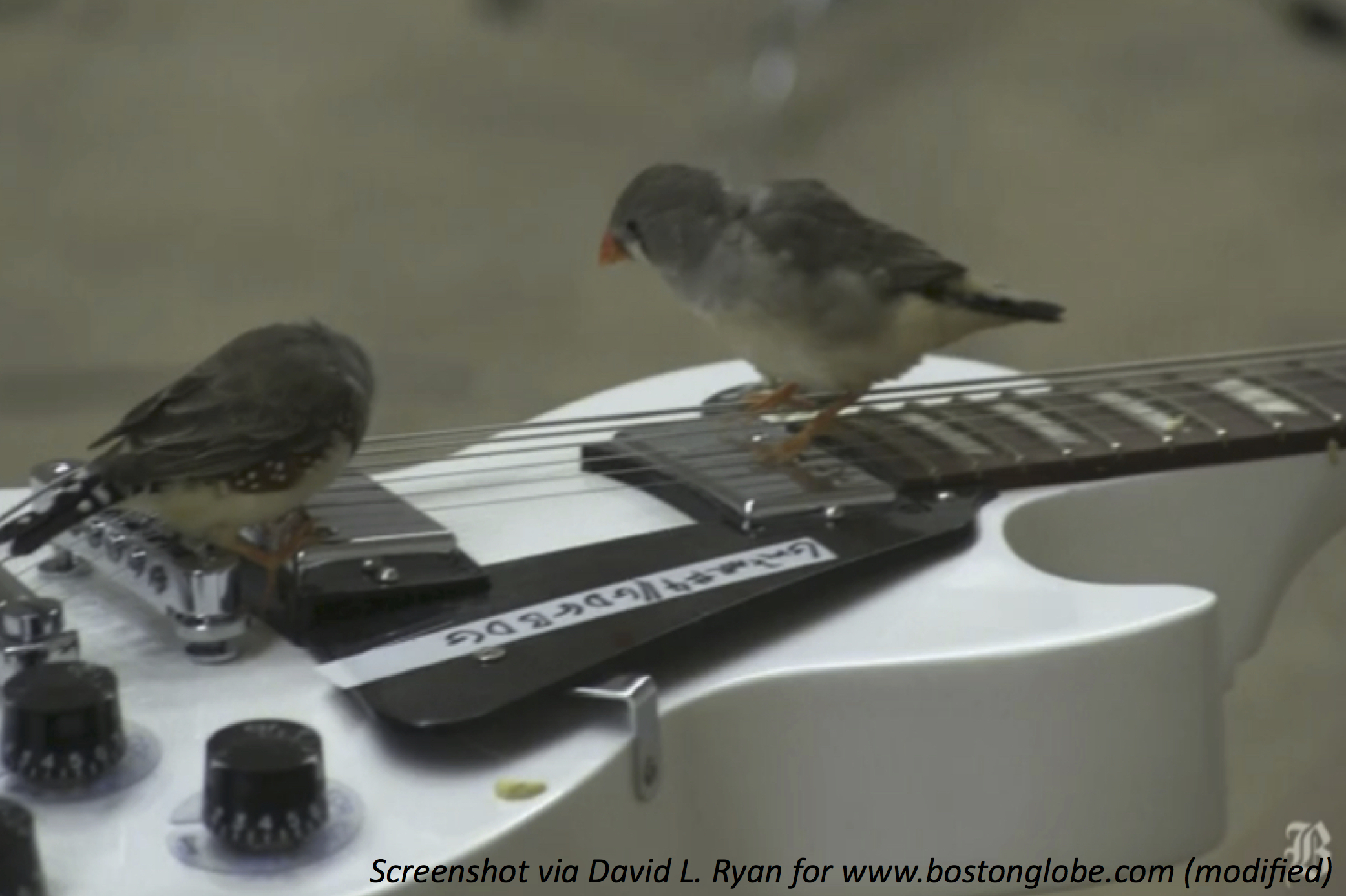 If You Give a Bird a Guitar…