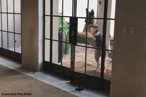 When Every Door Is a Doggie Door
