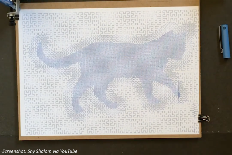 A One-Squiggle Cat