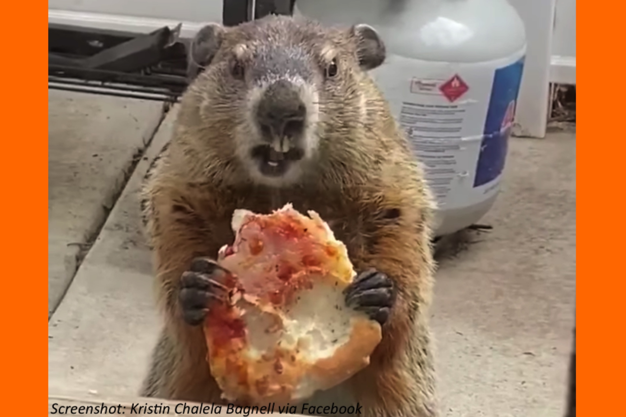 Hey! Quit Groundhogging the Pizza