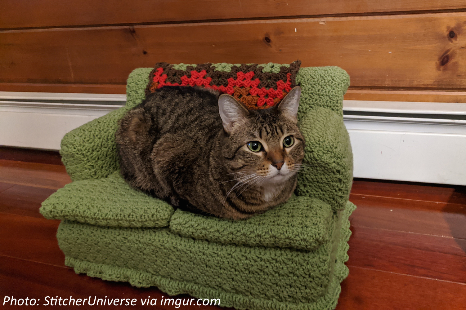 The Purr-fect Seat