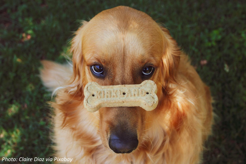 How Do Doggie Treats Taste?
