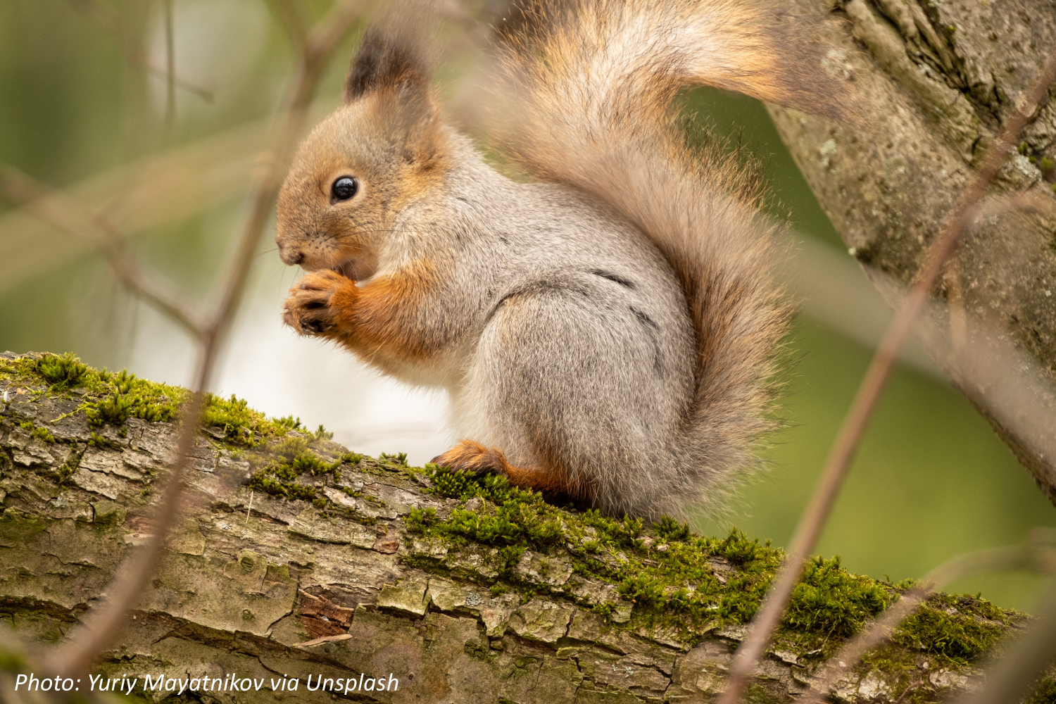 Squirreling It Away