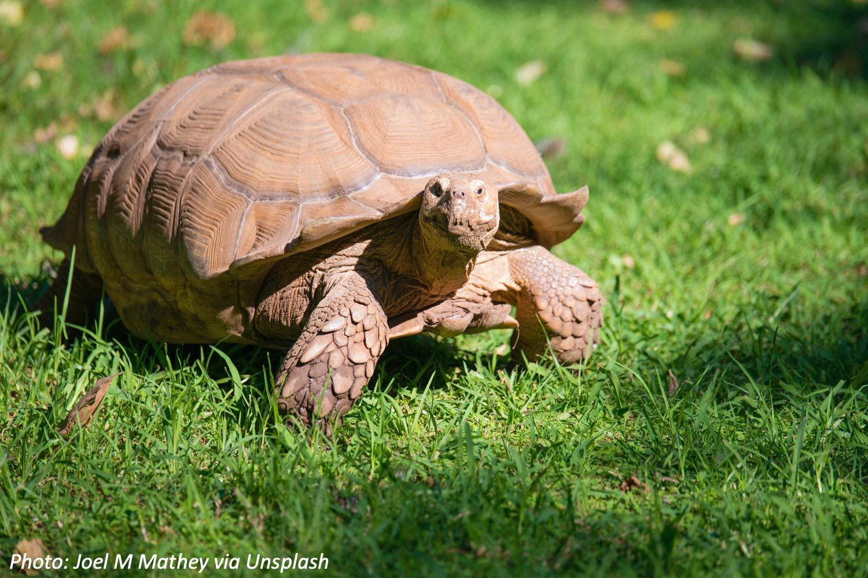 One Tough Tortoise