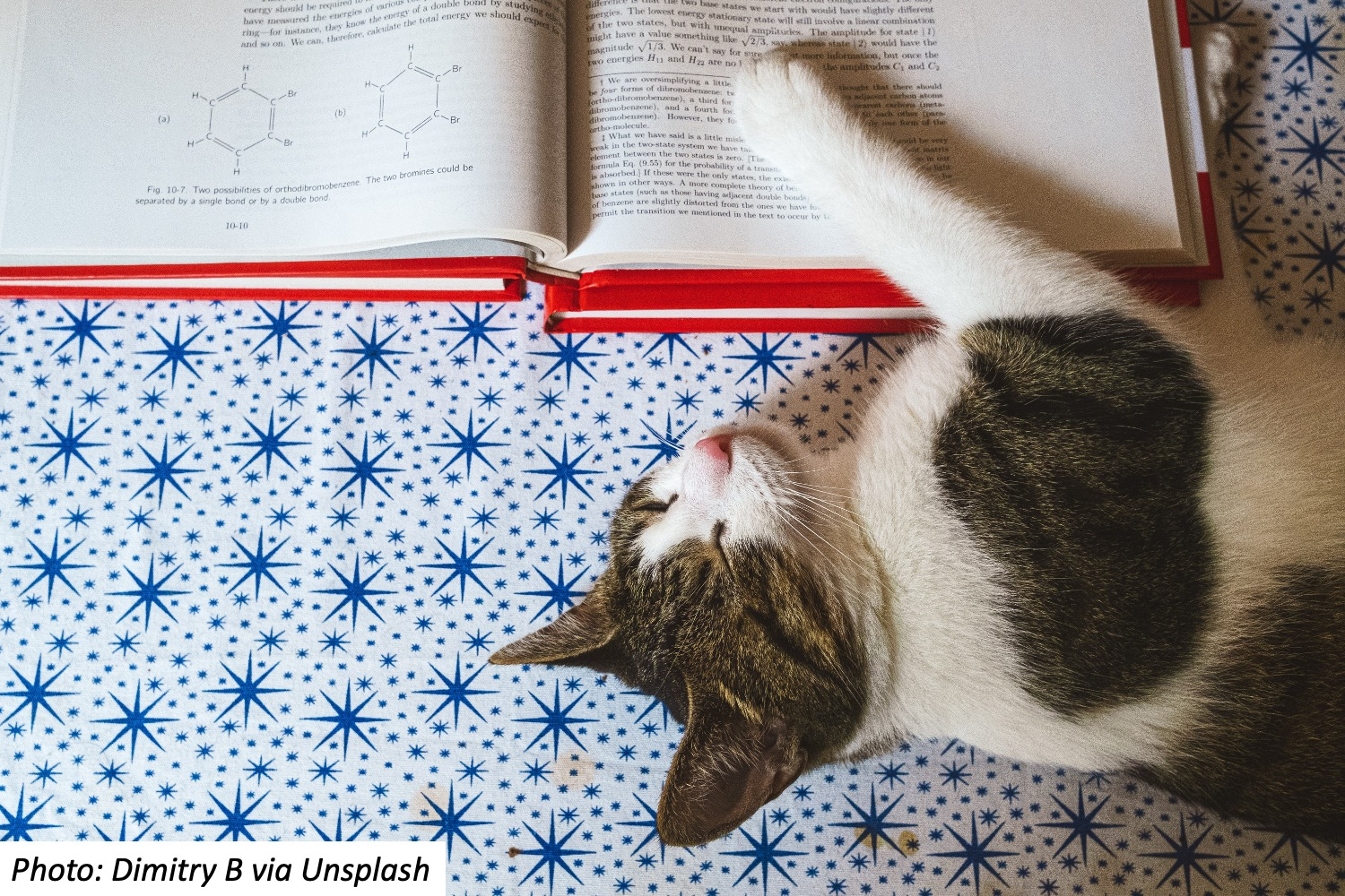 Reading a Book to Fluffy