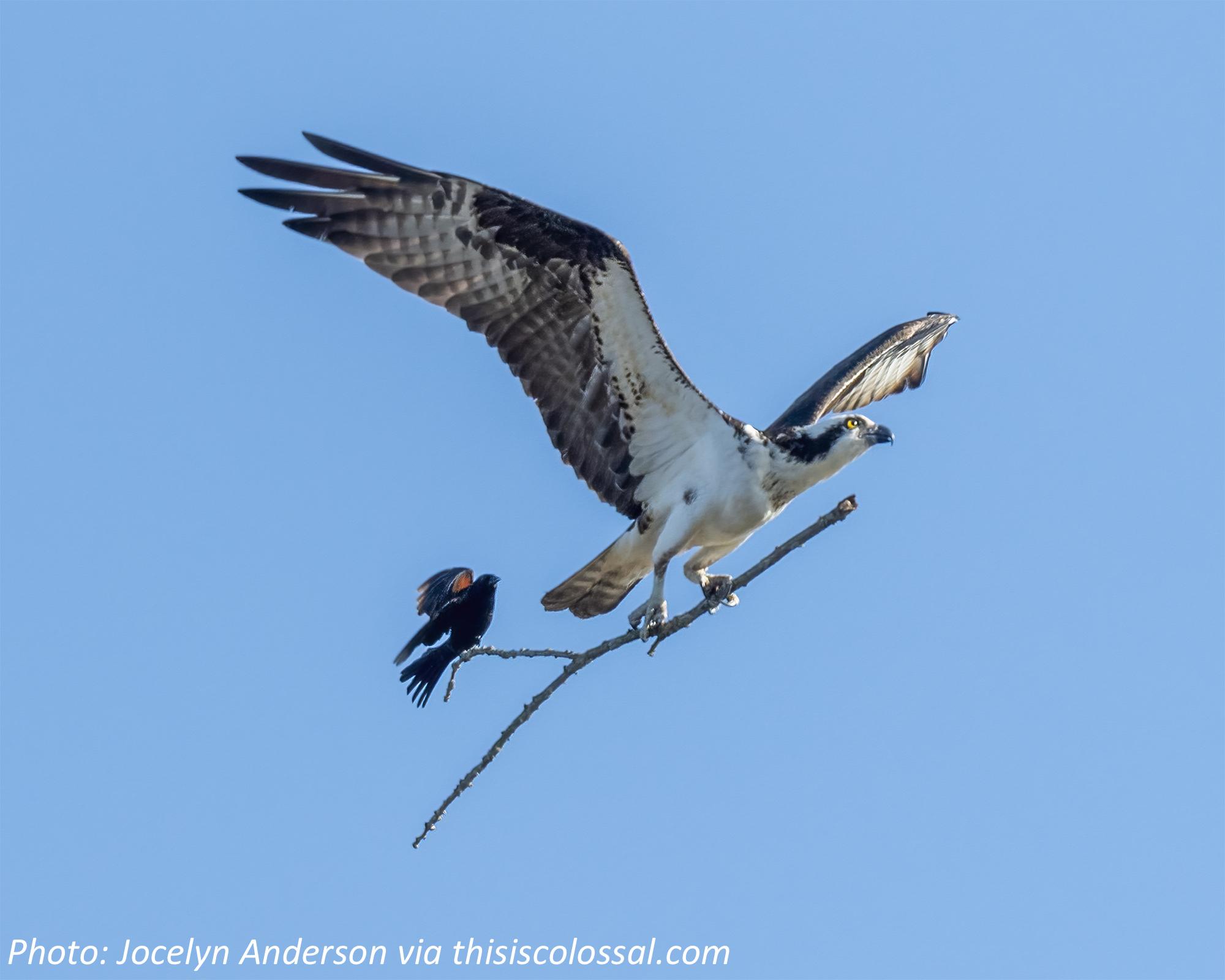 How Birds Stick Together