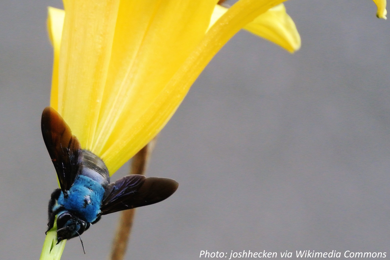 Are Bees Really Blue?