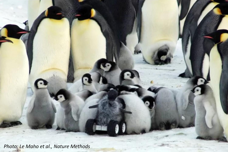 Fluffy Robot Penguin